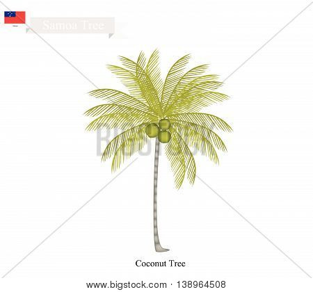 Samoa Tree Illustration of Coconut Tree. The Native Tree of Samoa.