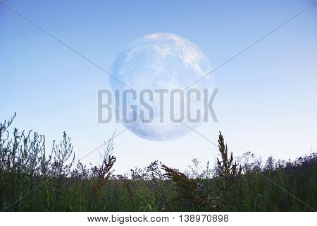 A picture of a big white moon in the sky. A field with the beautiful greenery and lavender.