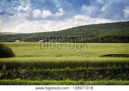 oat agriculture farming field landscape Quebec Canada