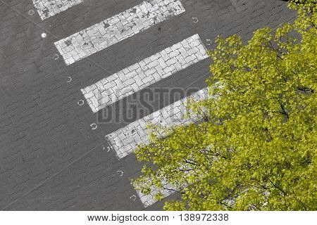 Zebra crossing and green tree top view