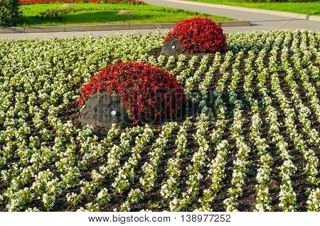 Summer park landscaping view - flowerbeds with landscaping details in form of ladybug beetles covered with red begonia flowers. Unusual funny landscaping in the summer park.