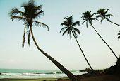 Постер, плакат: Пальмовое деревья на курортном побережье