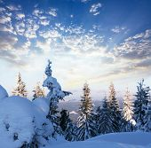 pic of winter scene  - Winter scene - JPG