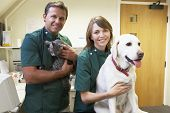 image of vets surgery  - Vetinary Staff With Dog And Cat In Surgery - JPG