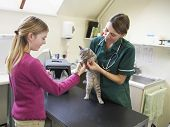 stock photo of vets surgery  - Young Girl Bringing Cat For Examination By Vet - JPG