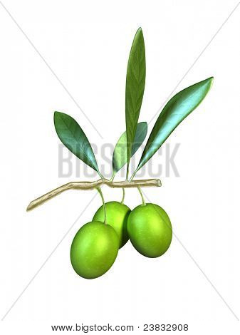 Olive fruits and leaves on a branch. Digital illustration.