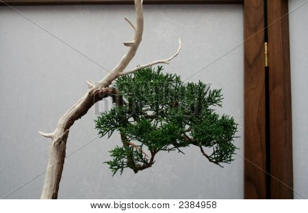Bonsai Background