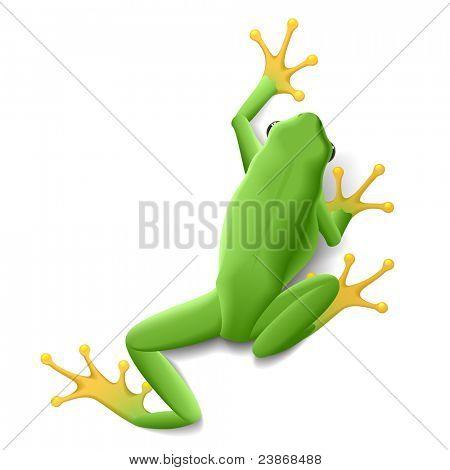 Green frog. Vector.