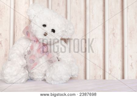 White Teddy Bear