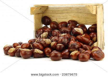 freshly fallen chestnuts(Aesculus hippocastanum) in a wooden crate