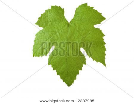 Grape-Leave With Clipping Path