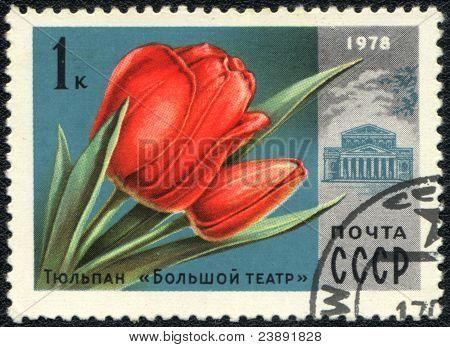 Tulip  Bolshoi Theatre