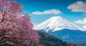 Mountain Fuji And Pink Cherry Blossom Sakura Tree On Blue Sky White Clound In Kawaguchiko, Japan ,ch poster