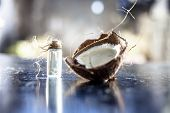 Close Up Of Raw Organic Coconut Or Cocos Nucifera With Its Essence In A Transparent Bottle Used In M poster