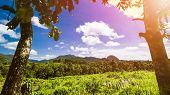 Tropical Landscape, Rain Forest Landscape, Summer Landscape, Beautiful Landscape poster
