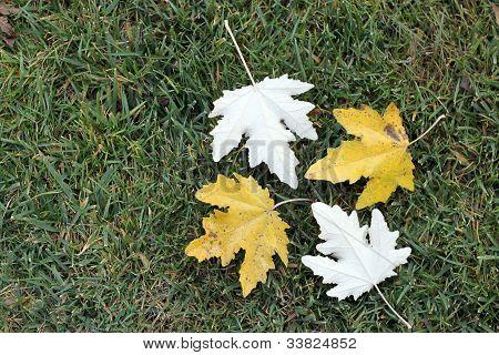 Team Of Autumn Leaves