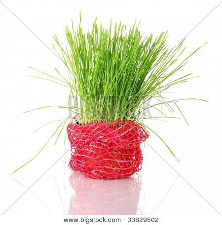 Green grass in flowerpot isolated on white