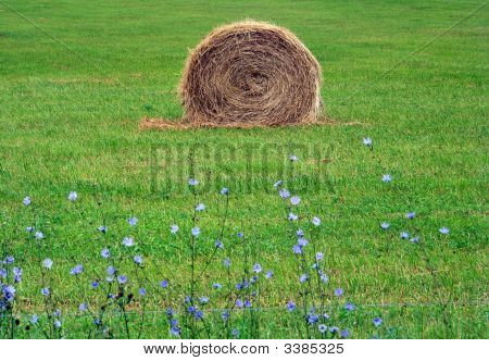 Round Bale Of Hay with Purple Flowers