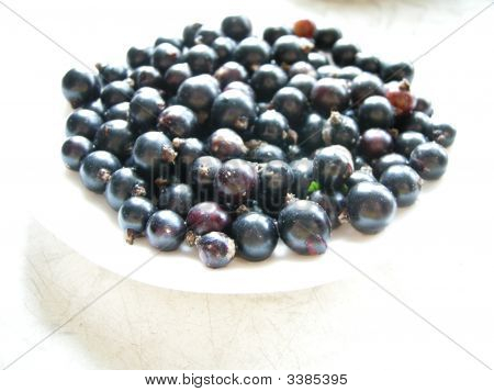 Black Currant Plate