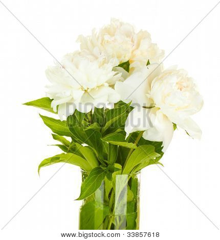 beautiful white peonies in glass vase with bow isolated on white