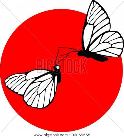 black veined white butterfly couple