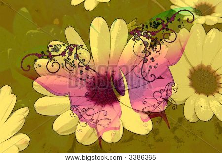 Butterfly Over Daisy Poster