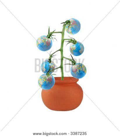 Globe Berries