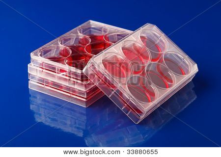 Blood samples in a container for testing diabetes