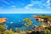Esterel Mediterranean Tree, Red Rocks Coast, Beach And Sea. French Riviera In Cote D Azur Near Canne poster