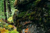 Beautiful Mystery Taiga With Rich Flora On High Mossy Cliff. Big Rocky Wall With Thick Moss Among Fr poster