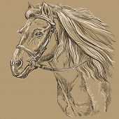 Horse Portrait With Bridle. Horse Head With Long Mane In Profile In Black And White Colors Isolated  poster
