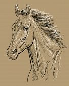 Hand Drawing Horse Portrait. Horse Head With Long Mane In Black And White Colors Isolated On Beige B poster