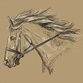 Horse Portrait With Bridle. Beautiful Horse Head With Long Mane In Profile In Black And White Colors poster