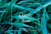 The Texture Of The Grass With Drops Classic Blue. Trendy Natural Background With White Frame And Cla poster
