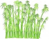 bamboo stems on white background