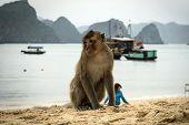 Monkey Island Beach At Lan Ha Bay, Ha Long Bay Tour In Cat Ba, Vietnam. poster