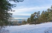 Snowy Slope And Green Spruce In The Foreground.top View Of The Islands And Fjords. Winter Day In The poster