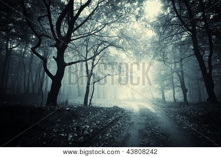 Road trough a dark forest with fog on halloween