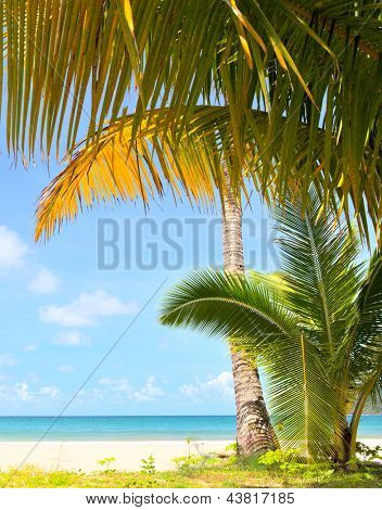 Palm trees, grass, sand and sea  under blue sky