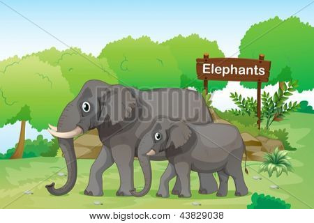 Illustration of the elephants with a wooden signage at the back