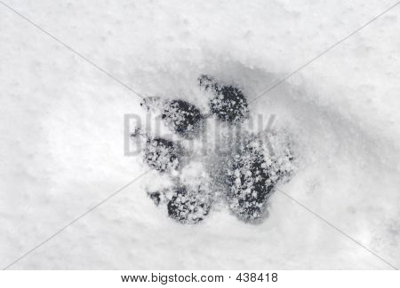 Pawprint In Snow