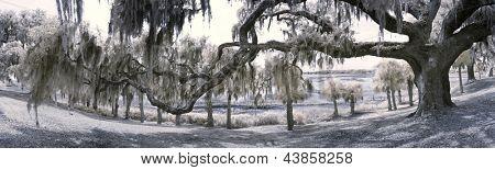 180 degree infrared panorama of live oak tree and south carolina coast