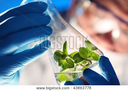 Scientist holding and examining samples with plants