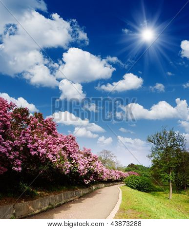 Sunny landscape with a road in the lush spring garden