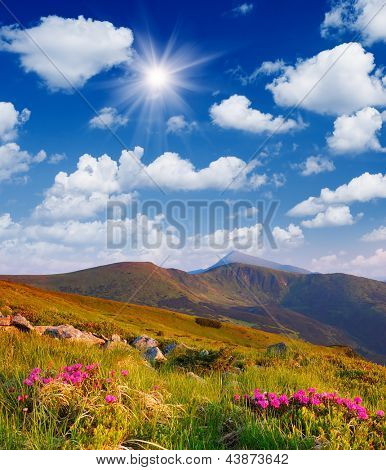 Sunny landscape with flowering shrubs rhododendron in the mountains