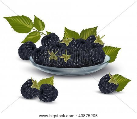 Blackberries in a glass bowl. Vector