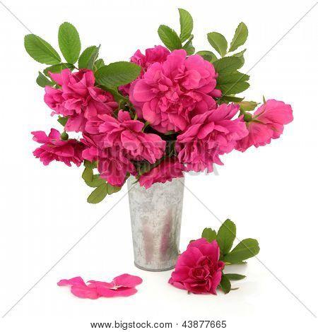 Rugosa rose flower arrangement in an aluminium vase over white background.