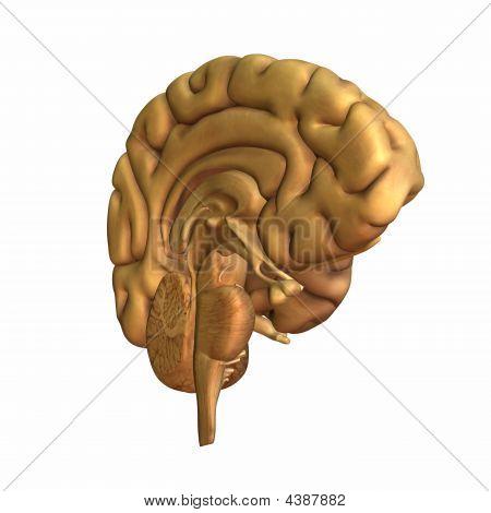 Brain - Half A Mind