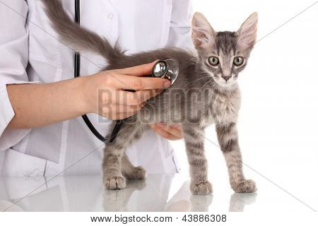 Veterinarian examining a kitten isolated on white