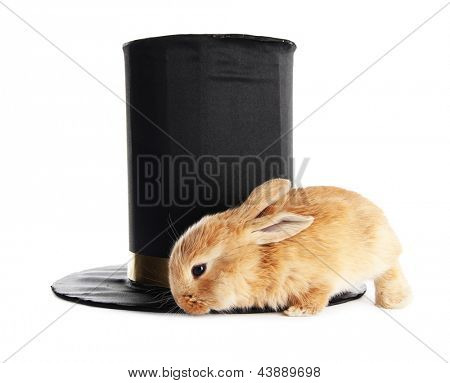 Fluffy foxy rabbit with black cylinder isolated on white
